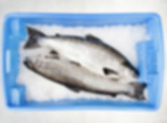 nicholas seafood sydney
