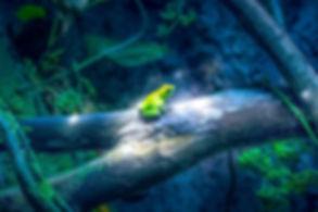 frog roberto-lopez-vxKyz3HLw2g-unsplash.