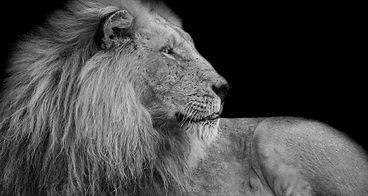 lion jeff-rodgers-T8OwOYRD7jU-unsplash.j