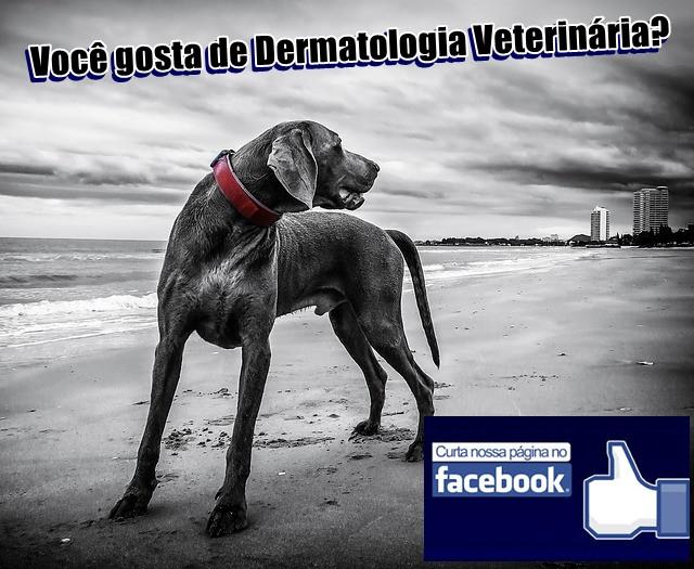 Raphael Rocha - Dermatologia Vetrinária