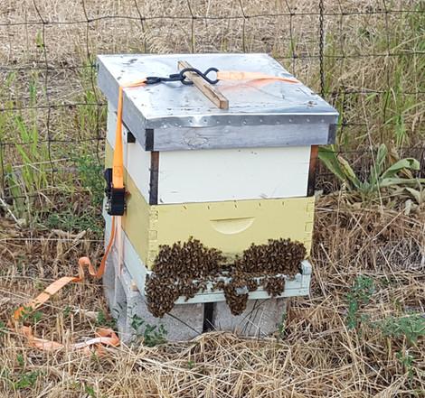 Raw Honey for sale in Longmont Colorado