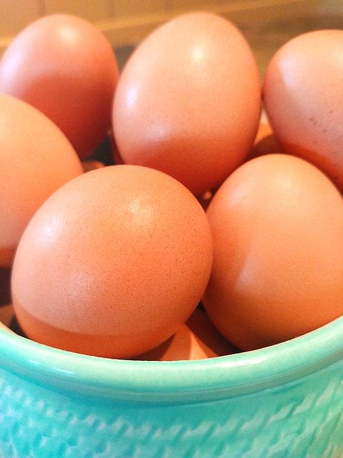 Oeufs - Eggs