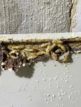 Termite movements
