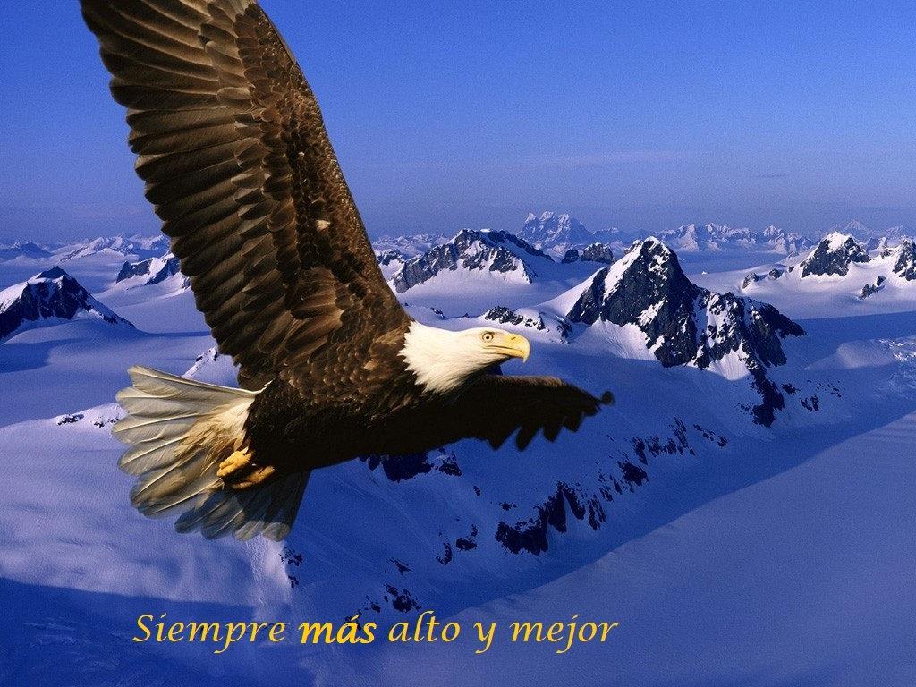 Aguila_Volando-1024x768-527181.jpg