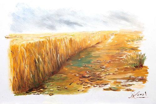 Camino de trigo