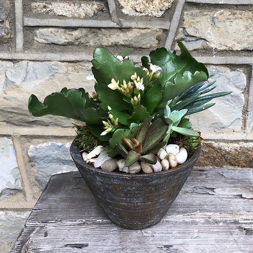 Succulents in Antique Pot