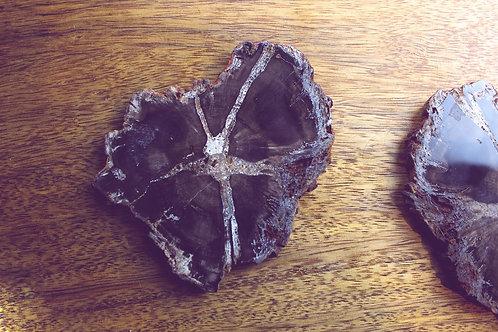 Scheibe versteinertes Holz