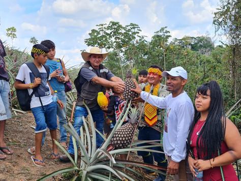 Prefeitura promove intercâmbio de práticas agrícolas entre produtor de abacaxi e indígenas