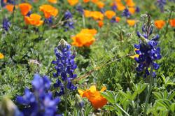 West Texas Flowers