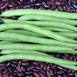Beans, Snap Bush