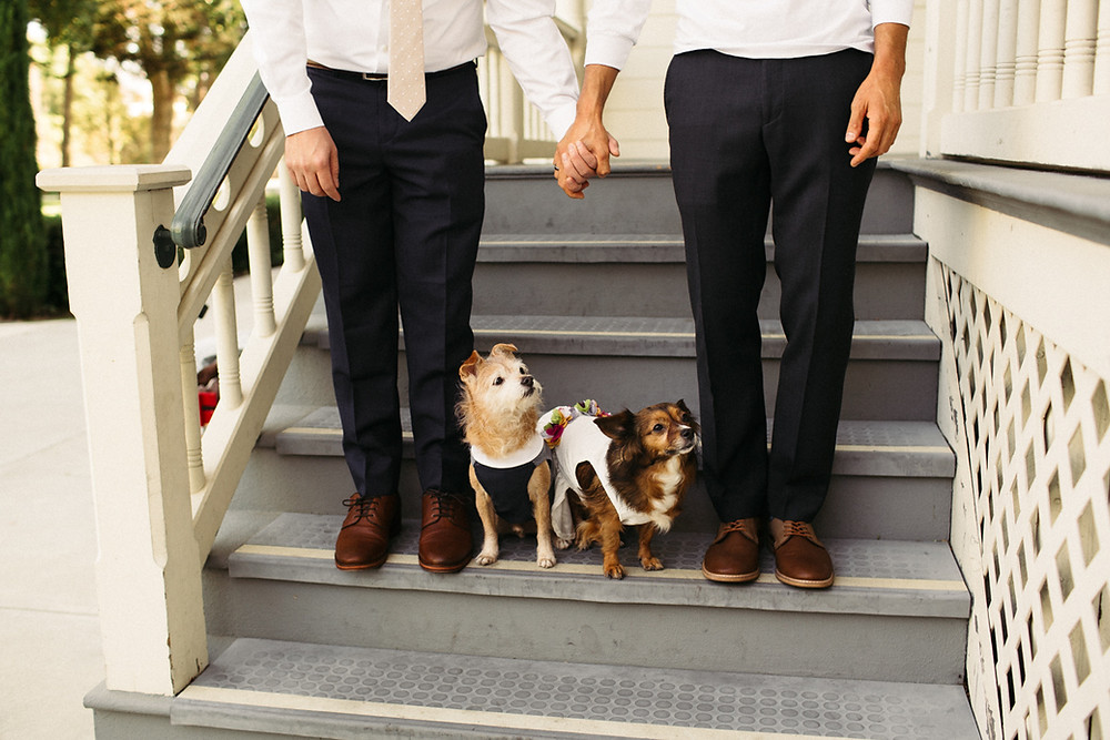 Gay wedding in camarillo ranch. Gay photoshoot with dogs. Ideas for a photoshoot. Los Angeles photographer Alex Shevchik. Soulful photography.