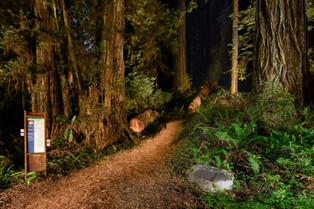 Redwoods Trail