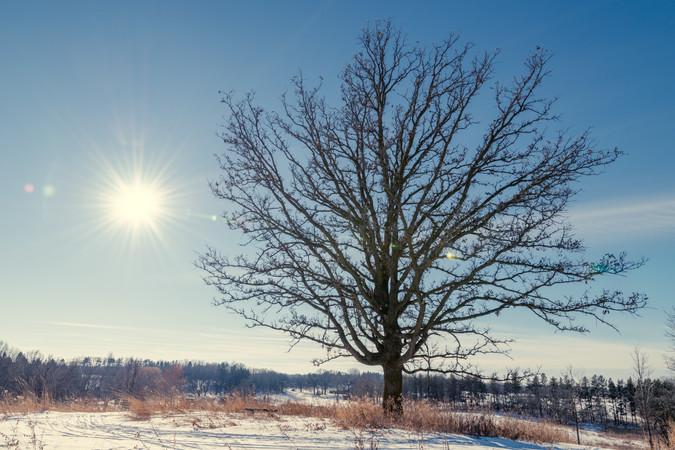 Winter Tree at the Arboretum