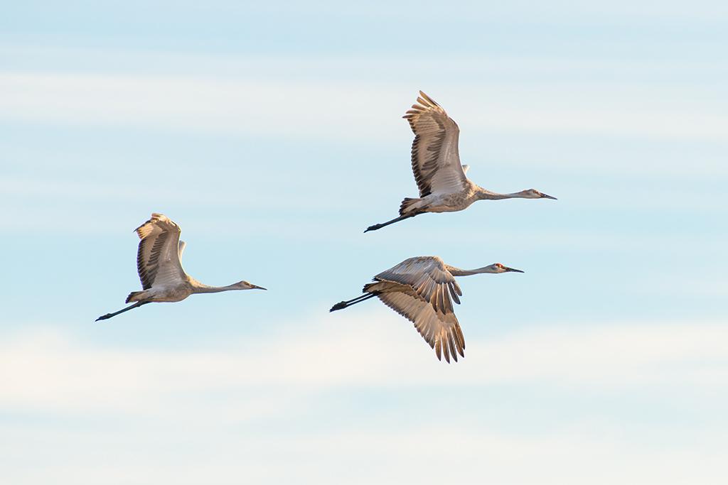 sand crane trio