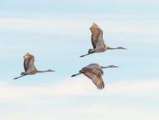 Catching Birds in Flight