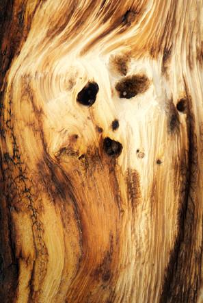 The Bristlecone Pine Scream