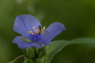 spring flower-1.jpg