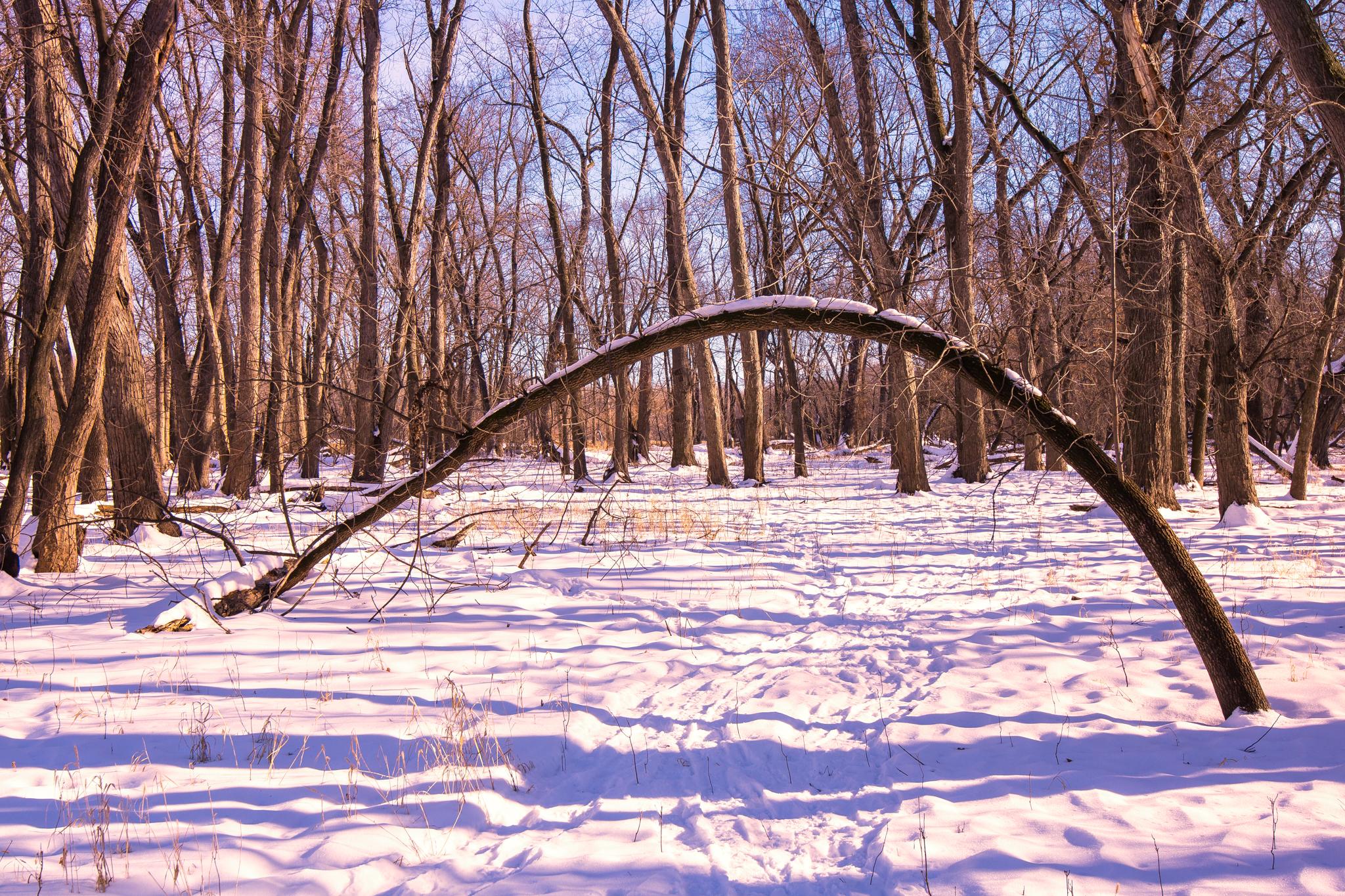 Winter's Arch