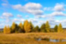 Crex Landscapes-2-cr-sm.jpg