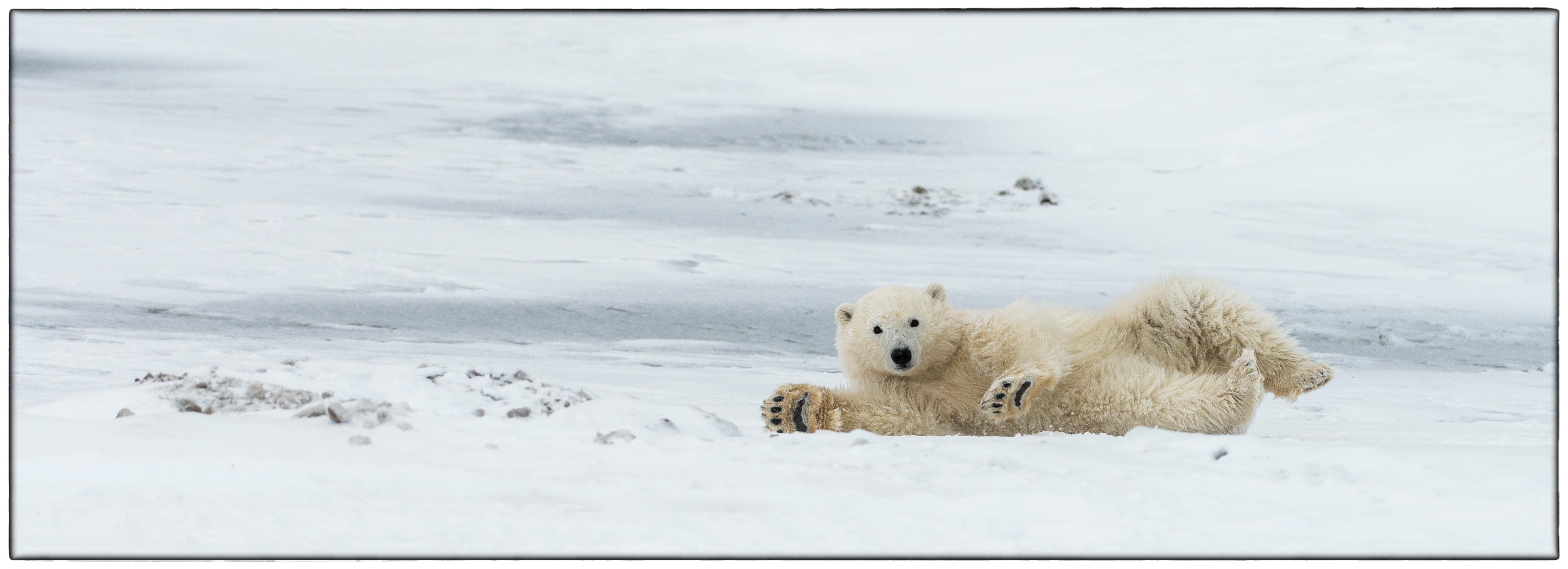 Cub Rolling in snow