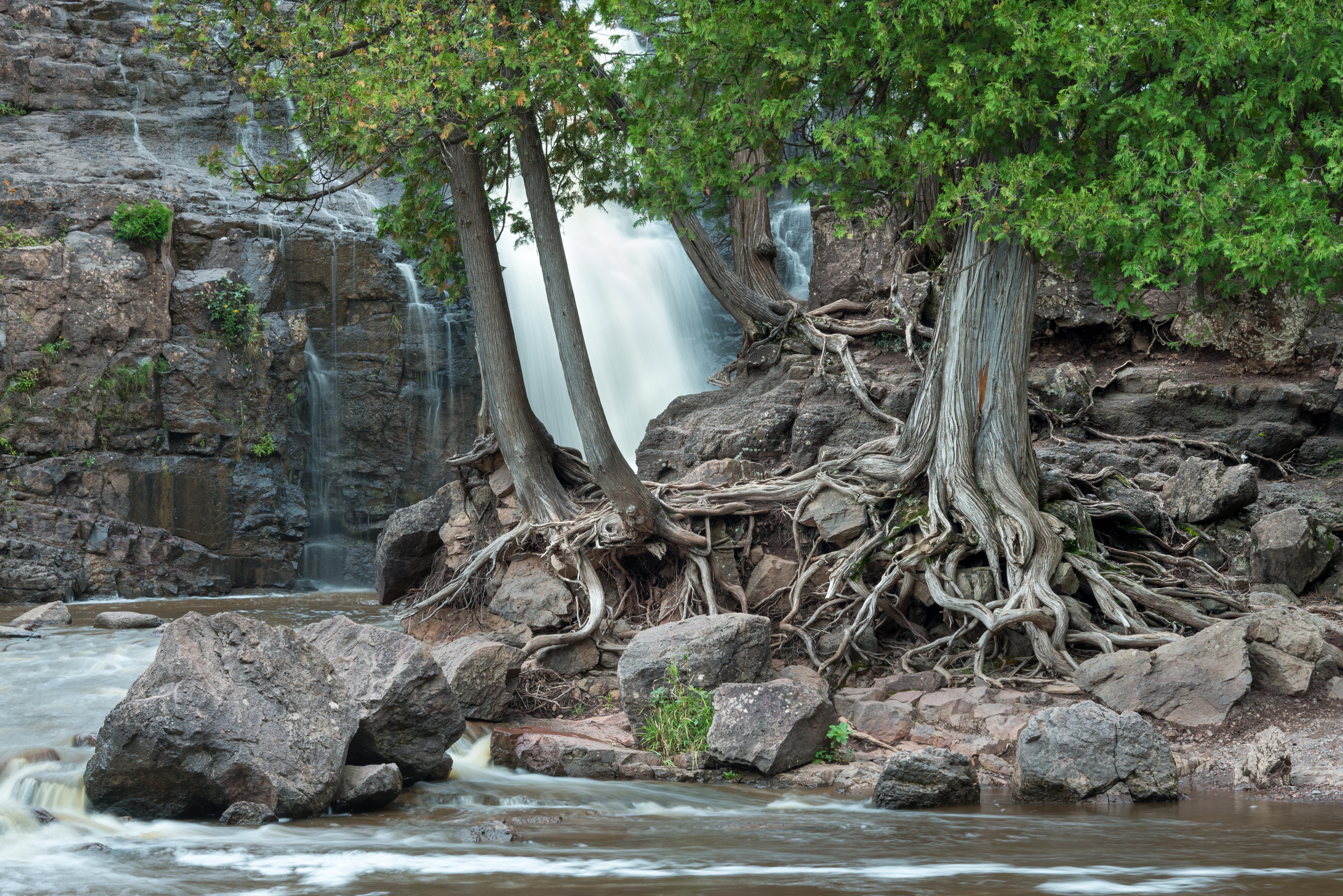 Gooseberry Falls Roots