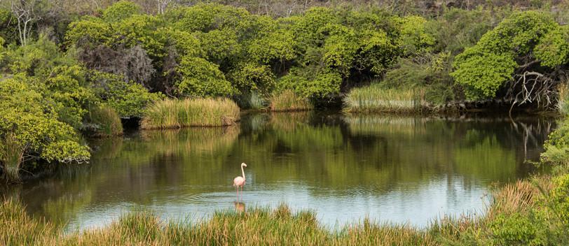 Punta Moreno - Flamingo Oasis