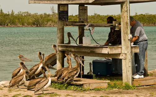 Pelican Fish Market