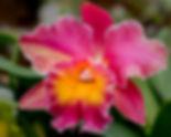 OrchidShootingTip-4.jpg