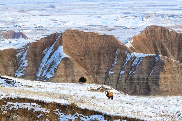 Big Horn at Ancient Hunters Overlook