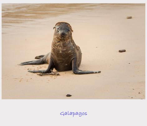 Galapagos Cover.jpg