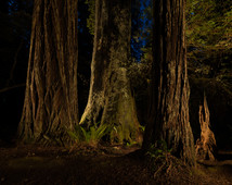 Light Painting in Lady Bird Grove