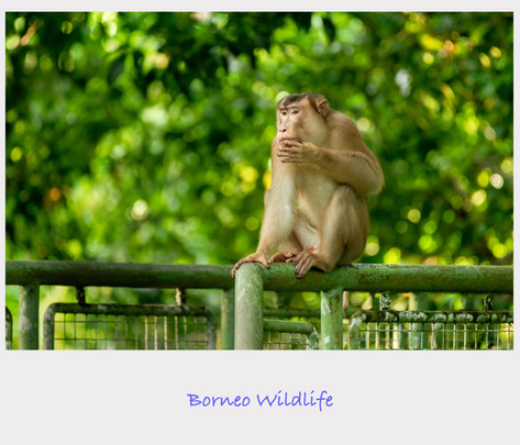 Borneo Cover.jpg