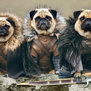 cute-pugs-game-of-thrones-pugs-of-wester