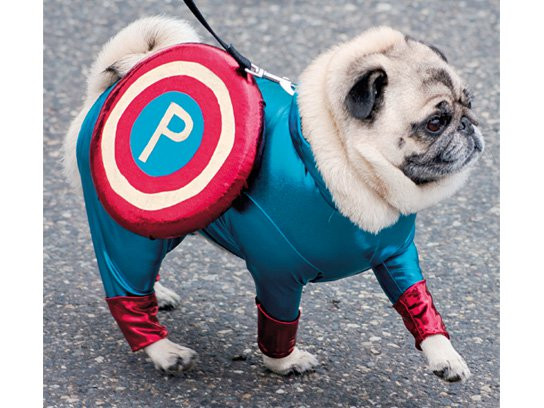 pugs-in-costumes-captain-pug.jpg