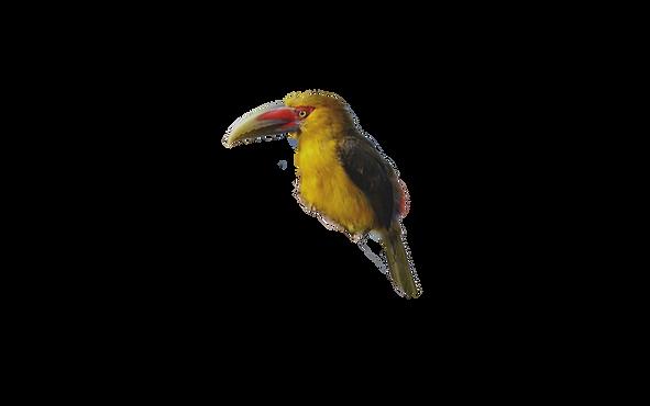 ibitipoca-gruta-dimas%20(1)_edited.png