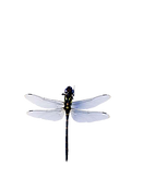 kisspng-insect-dragonfly-blue-sky-blue-d