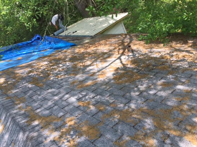 Lepard construction repairing roof