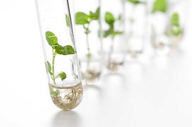 Tech 12 Test Tube Plants.jpg