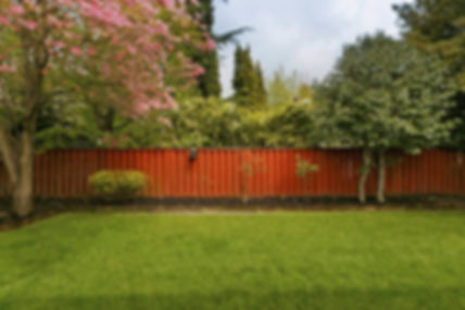 1-Backyard-Tree-Ideas-iStock-870x579.jpg