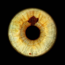Iris-Fotografie-grüne-Augen-mit-Fleck-sp