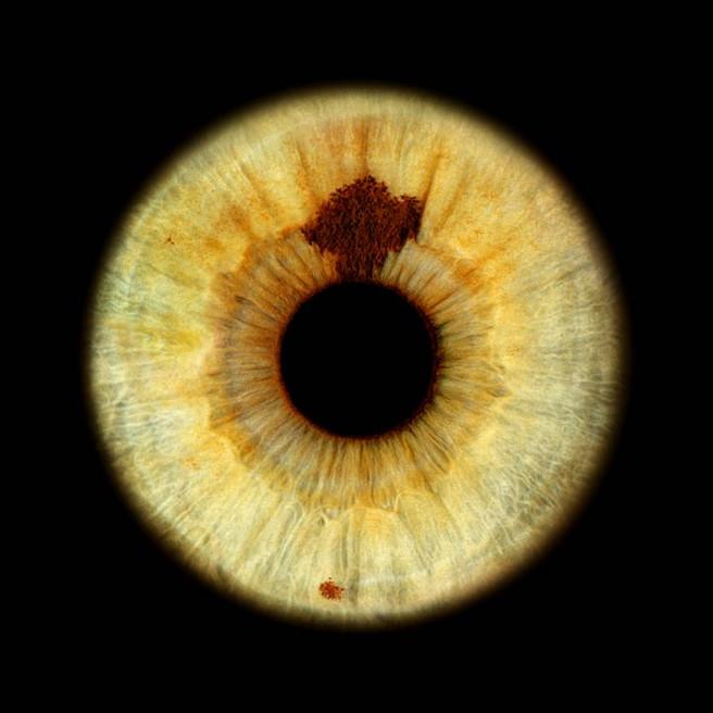 Grüne Augen in der Irisfotografie