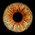 iris-foto-luzern-logo-head-iris-foto-luz