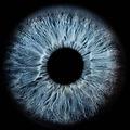 Ein blaues, kühles Auge ohne Sklera (weisse Augenhaut) und Pupille, also nur die Iris. Dieses Iris-Foto oder auch genannt Iris-Picture zeigt ein menschliches Auge in Makroaufnahme das viele Zeichnungen und Tiefen in dunkelblau und weiss hat.