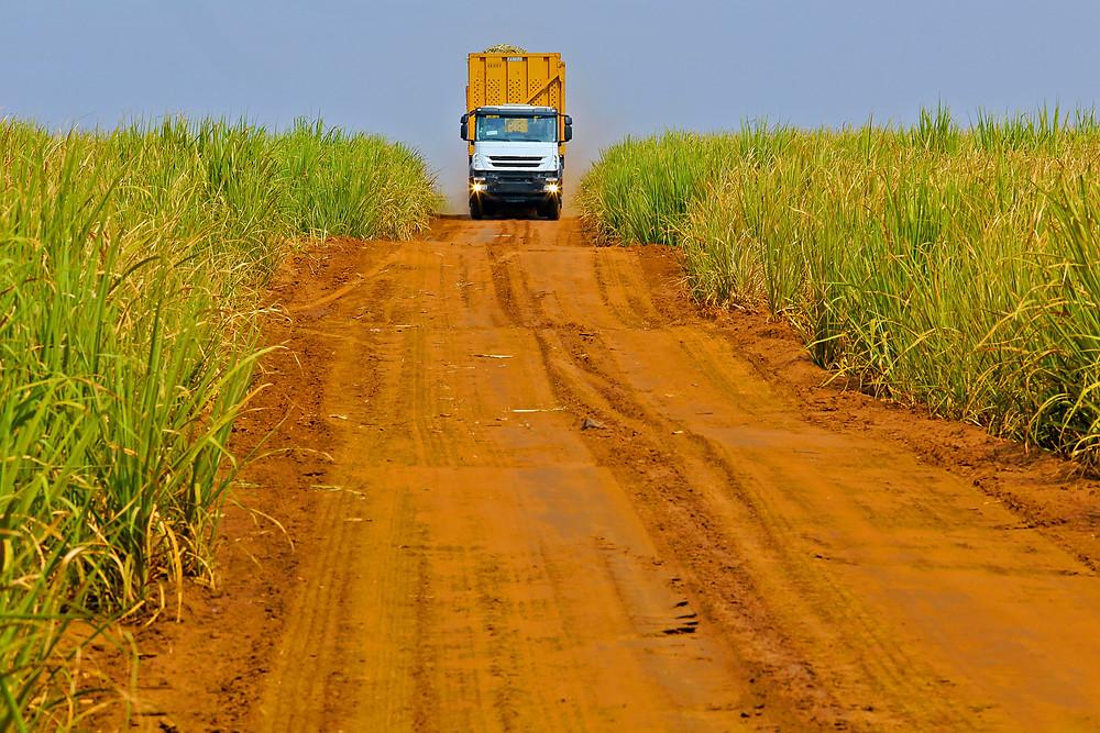 Camión recorriendo campos de caña de azúcar