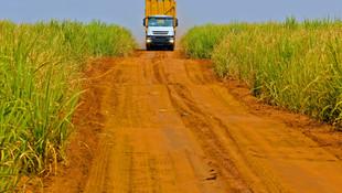 [EN] Sugarcane Yield Estimates with just a Field Polygon!