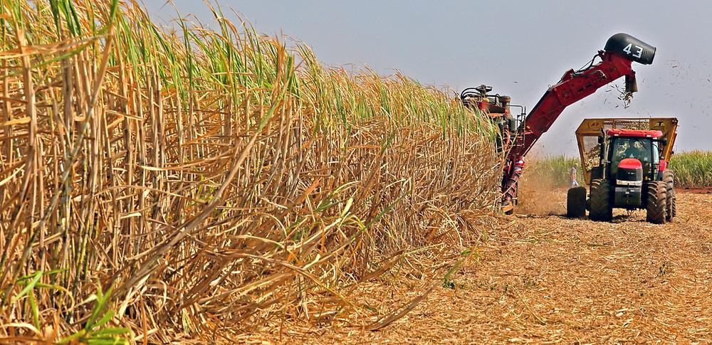 Campo de caña de azúcar siendo cosechado por un tractor