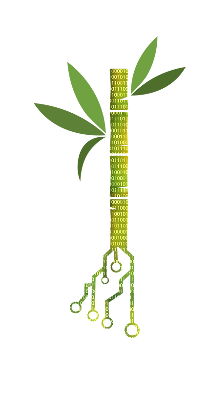 Bamboo stalk data.png