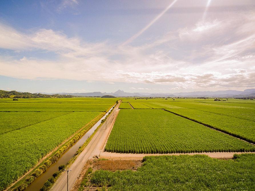 sugarcane%20plantation%20aerial%20nice_e