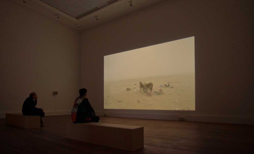 Wim Catrysse | MSR, 2012