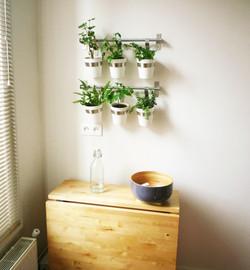 mur végétal dans la cuisine